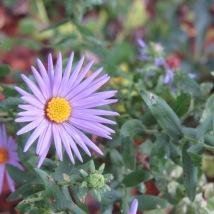 purple happiness
