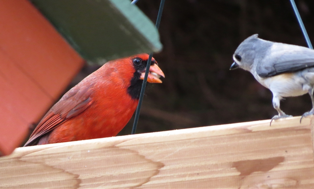 showdown at the feeders (1/3)