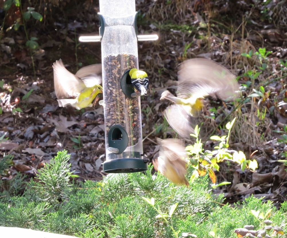 showdown at the feeders (2/3)