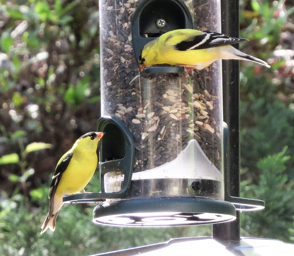 showdown at the feeders (3/3)