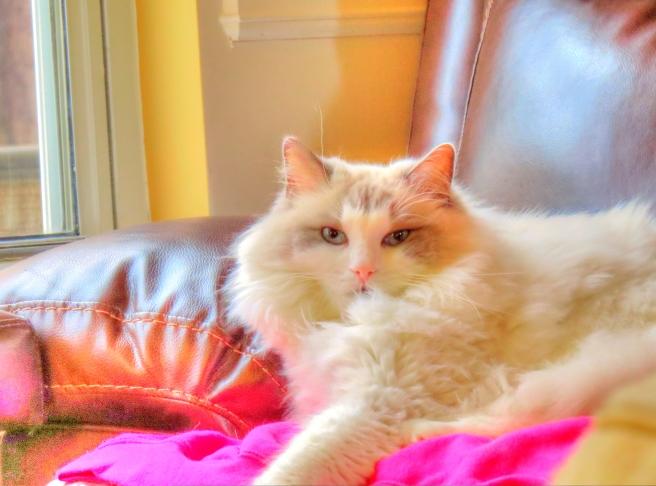 2015-HDR-Cat